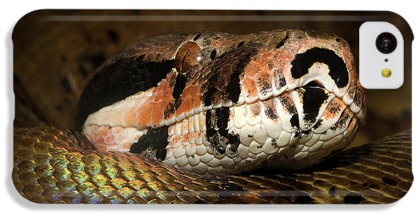 Hypo Colombian Boa IPhone 5c Case by Nigel Downer