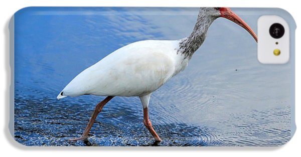 Ibis Visitor IPhone 5c Case by Carol Groenen