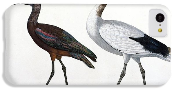 Ibis iPhone 5c Case - Ibises by Jules Cesar Savigny