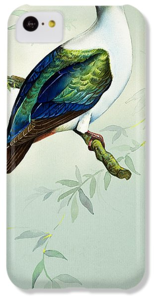 Imperial Fruit Pigeon IPhone 5c Case by Bert Illoss