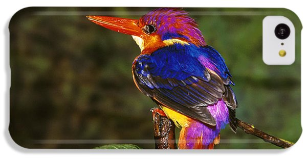 India Three Toed Kingfisher IPhone 5c Case by Anonymous