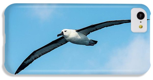 Indian Ocean Yellow-nosed Albatross IPhone 5c Case by Peter Chadwick