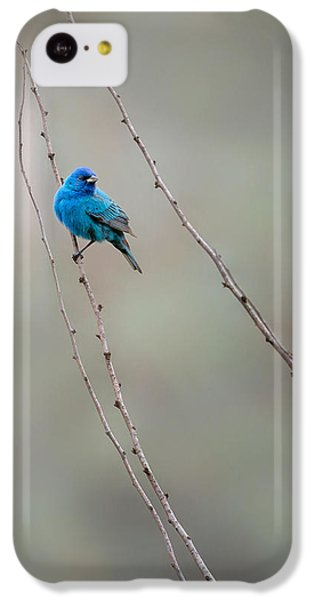 Indigo Bunting IPhone 5c Case by Bill Wakeley