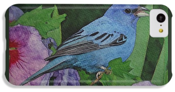 Indigo Bunting No 2 IPhone 5c Case by Ken Everett