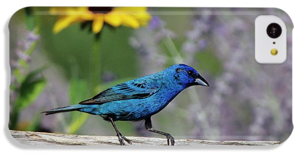 Indigo Bunting (passerina Cyanea IPhone 5c Case by Richard and Susan Day