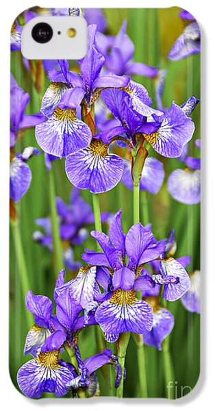 Irises IPhone 5c Case by Elena Elisseeva