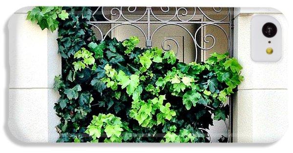 Green iPhone 5c Case - Ivy by Julie Gebhardt