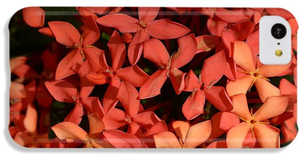 Decorative iPhone 5c Case - Ixora Red by Sanjay Ghorpade