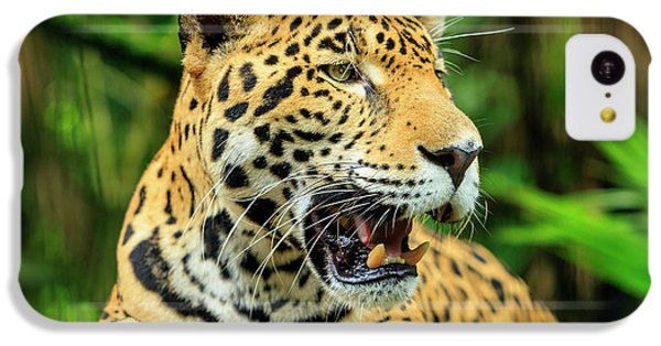 Belize iPhone 5c Case - Jaguar (panthera Onca by Stuart Westmorland