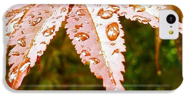 Japanese Maple Leaves IPhone 5c Case