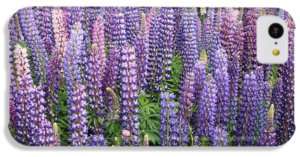 IPhone 5c Case featuring the photograph Just Lupins by Nareeta Martin