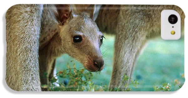 Kangaroo Joey IPhone 5c Case by Mark Newman