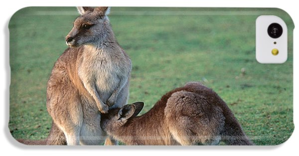 Kangaroo With Joey IPhone 5c Case by Gregory G. Dimijian, M.D.