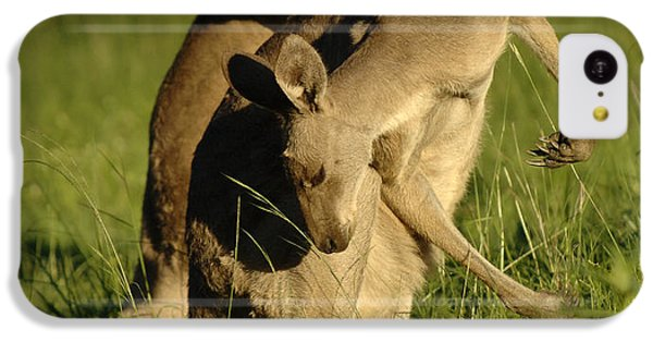 Kangaroos Taking A Bow IPhone 5c Case by Bob Christopher