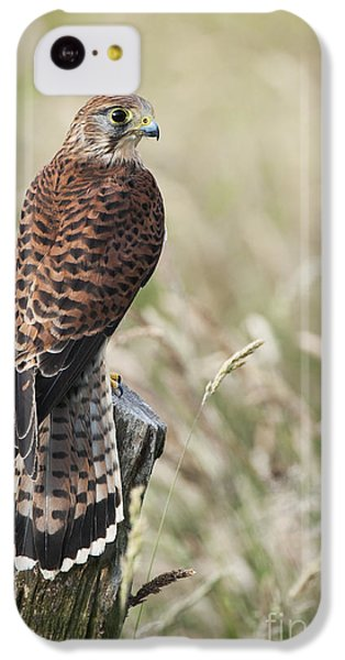 Kestrel IPhone 5c Case by Tim Gainey