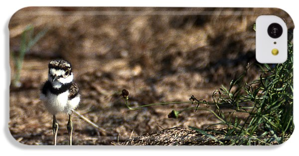 Killdeer iPhone 5c Case - Killdeer Chick by Skip Willits