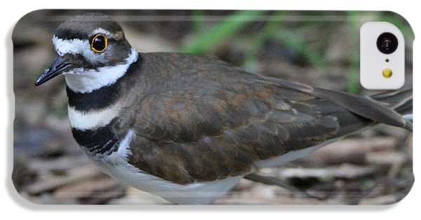 Killdeer iPhone 5c Case - Killdeer by Dan Sproul