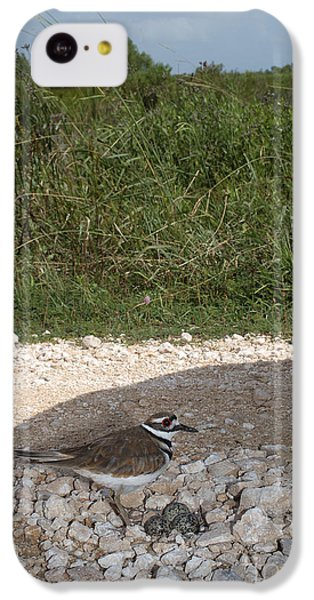 Killdeer Defending Nest IPhone 5c Case by Gregory G. Dimijian