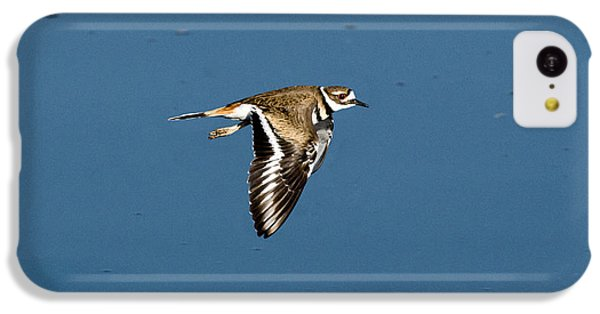 Killdeer In Flight IPhone 5c Case by Anthony Mercieca