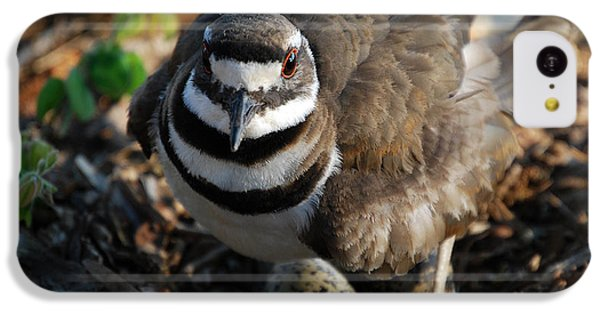 Killdeer iPhone 5c Case - Killdeer Mom by Skip Willits