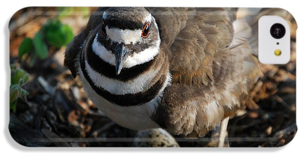 Killdeer Mom IPhone 5c Case by Skip Willits