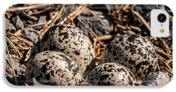 Killdeer Nest IPhone 5c Case by Lara Ellis