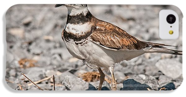 Killdeer iPhone 5c Case - Killdeer Nesting by Lara Ellis
