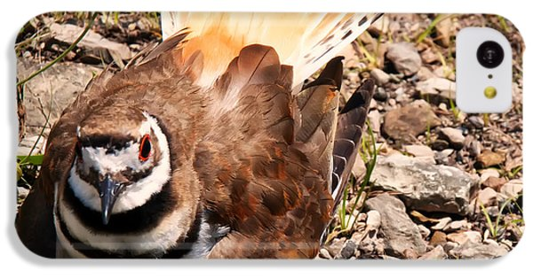 Killdeer iPhone 5c Case - Killdeer On Its Nest by Chris Flees