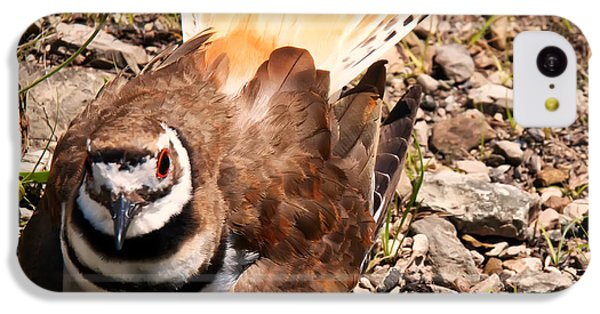 Killdeer On Its Nest IPhone 5c Case by Chris Flees