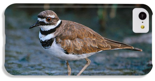 Killdeer IPhone 5c Case by Paul J. Fusco