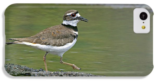 Killdeer iPhone 5c Case - Killdeer Walking by Sharon Talson