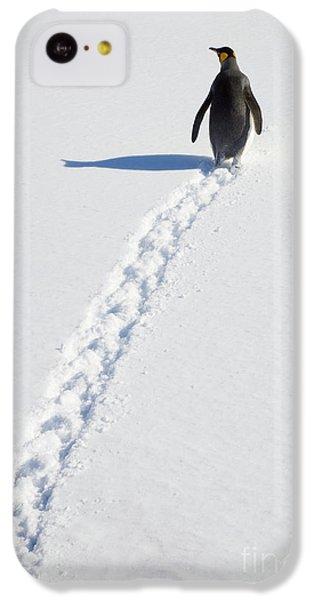 King Penguin And Tracks S Georgia Island IPhone 5c Case by Yva Momatiuk and John Eastcott