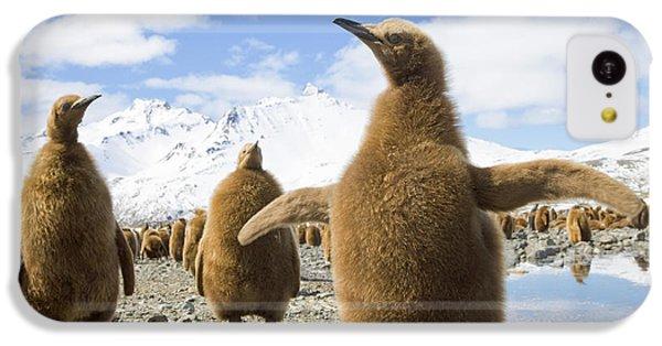 King Penguin Chicks South Georgia Island IPhone 5c Case by Yva Momatiuk and John Eastcott