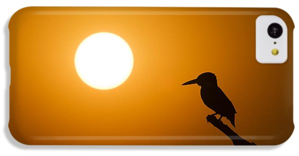 Kingfisher Sunset IPhone 5c Case by Tim Gainey