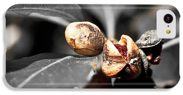 IPhone 5c Case featuring the photograph Knew Seeds Of Complentation by Miroslava Jurcik