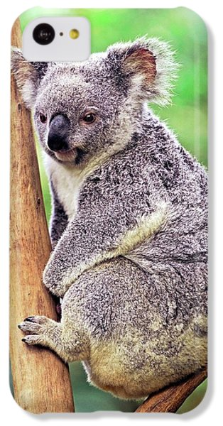 Koala In A Tree IPhone 5c Case