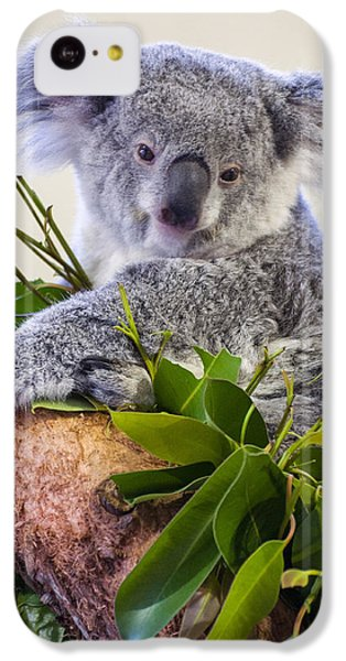 Koala On Top Of A Tree IPhone 5c Case by Chris Flees