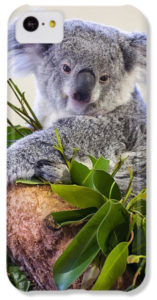 Koala On Top Of A Tree IPhone 5c Case