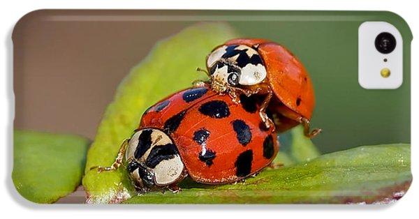 Ladybird Coupling IPhone 5c Case