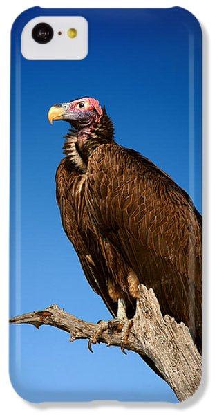 Lappetfaced Vulture Against Blue Sky IPhone 5c Case