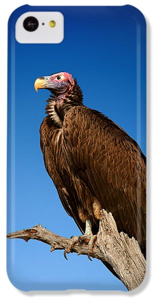 Lappetfaced Vulture Against Blue Sky IPhone 5c Case by Johan Swanepoel