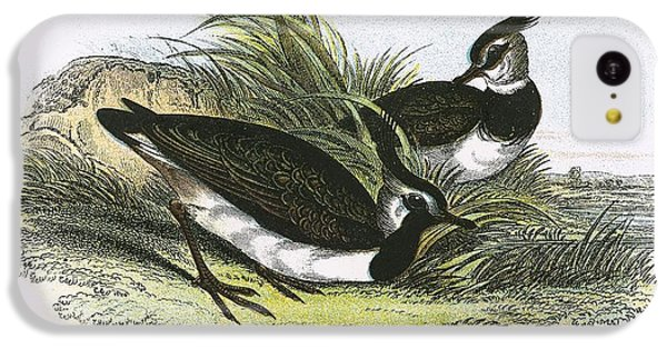 Lapwing IPhone 5c Case