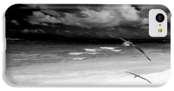 Laysan Albatross French Frigate Shoals IPhone 5c Case by Paul D Stewart
