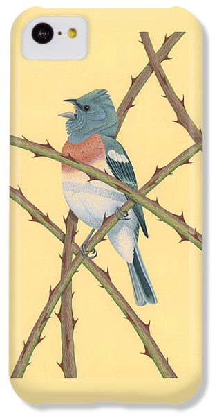 Lazuli Bunting IPhone 5c Case by Nathan Marcy