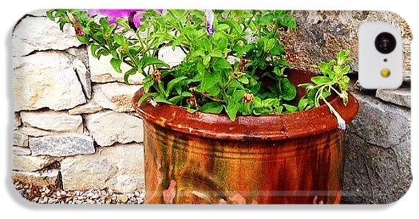Decorative iPhone 5c Case - Anduze Flower Pot With Petunias by Cristina Stefan