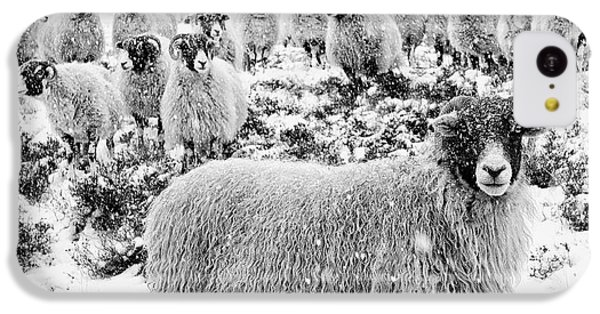 Sheep iPhone 5c Case - Leader Of The Flock by Janet Burdon