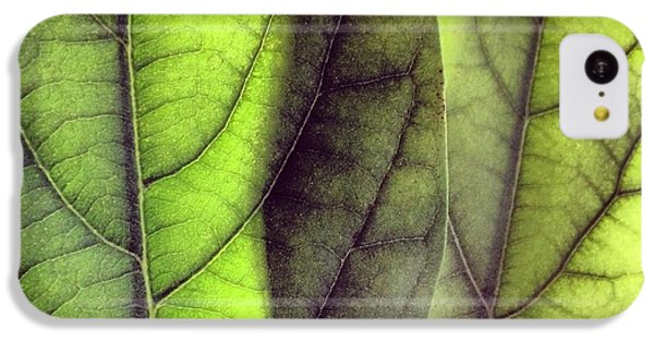 Leaf Abstract IPhone 5c Case by Christy Beckwith