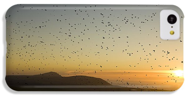 Least Auklets, Returning To Their Nest IPhone 5c Case by Brian Guzzetti
