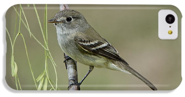 Least Flycatcher IPhone 5c Case