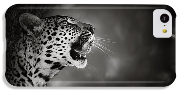 Portraits iPhone 5c Case - Leopard Portrait by Johan Swanepoel